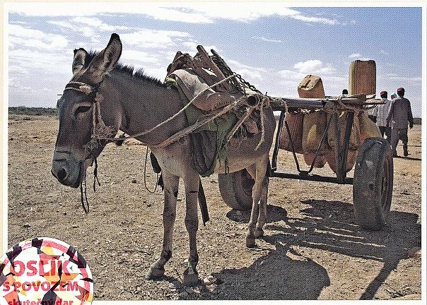 Koupil jsem osla! I s vozíkem
