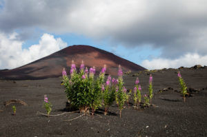 Tolbačik erupce 1975