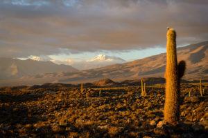 Echinopsis atacamensis, Atacama