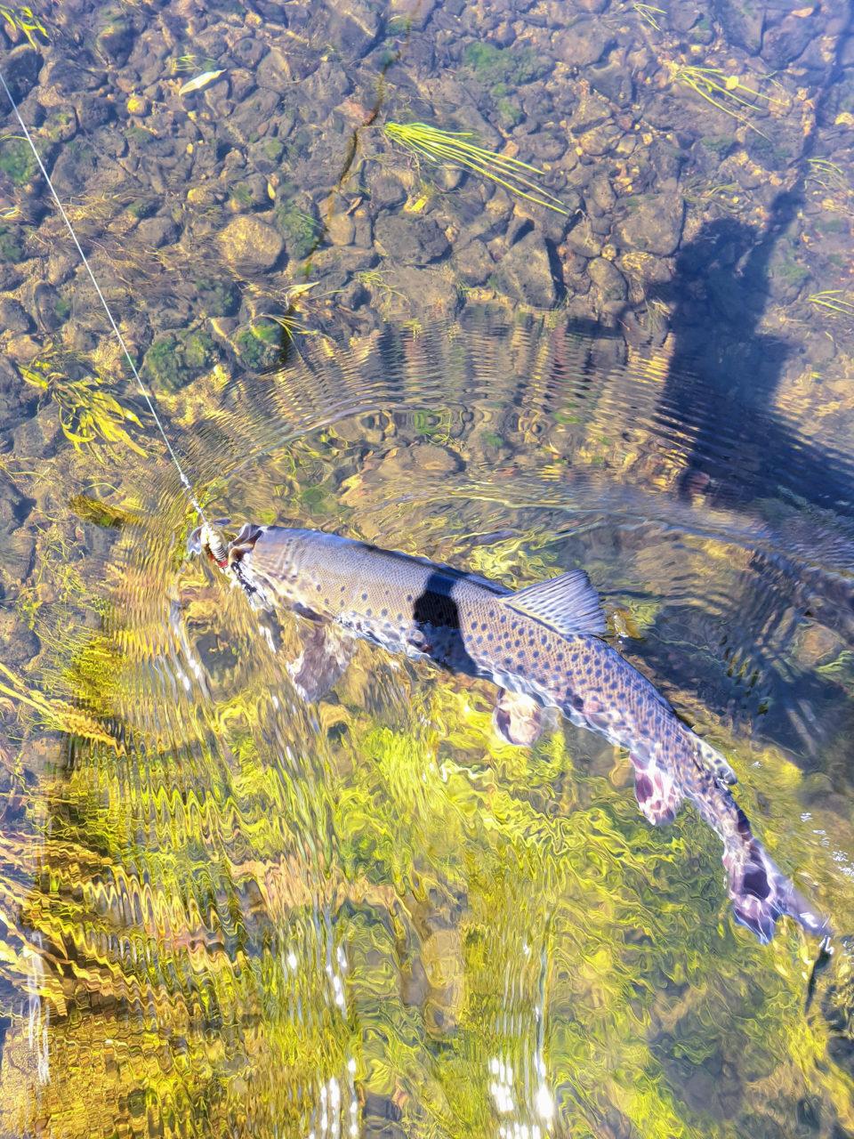 Rybaření na Ononu